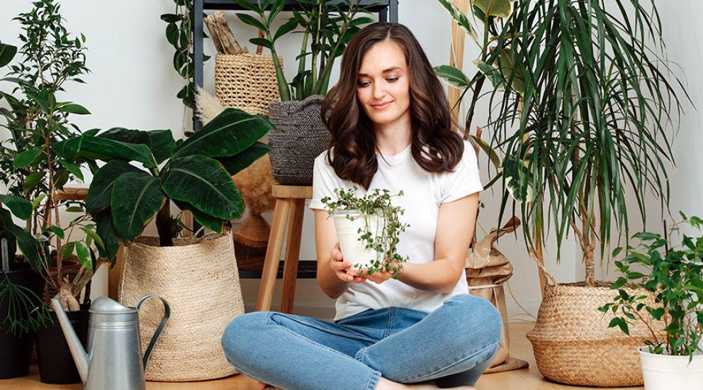 Las plantas antimosquitos de interior y exterior